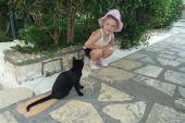 031. Греческие коты - непременный атрибут