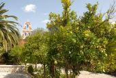 050. Огромные плоды лимонов больше напоминают грейпфрут